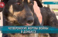 Четвероногие жертвы войны в Донбассе